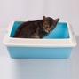 산시아 토비 평판형 화장실 블루