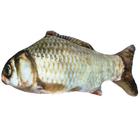 쿠치올로 캣닢 물고기 붕어 사진