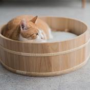 고양이도넛 오동오동냥 S