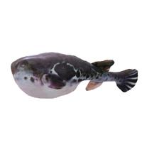 아미캐롤 캣닢 물고기인형 복어
