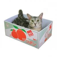 데코퐁 한라봉 박스